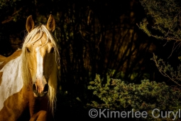 Unbranded the film