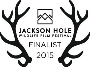 Jackson Hole Wildlife Film Festival Winner 2015